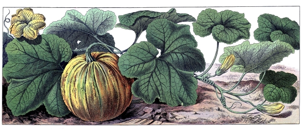 Botanical illustration of yellow pumpkin with fruit leaf and flower