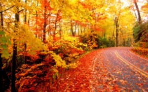 The road home in Autumn